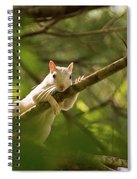 Famous Brevard White Squirrel Spiral Notebook