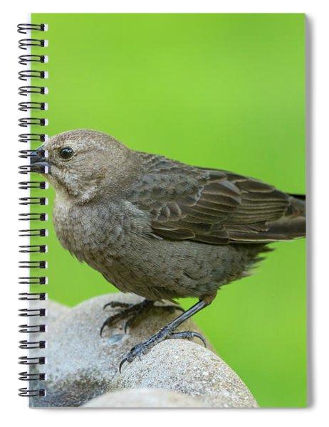 Female Brown Headed Cowbird Spiral Notebook