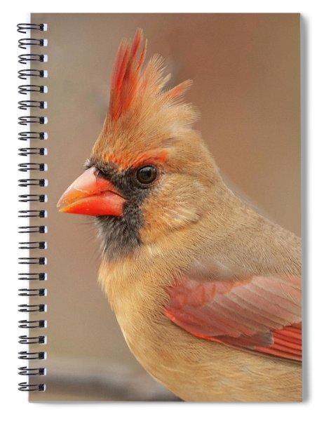 Female Cardinal Portrait Spiral Notebook