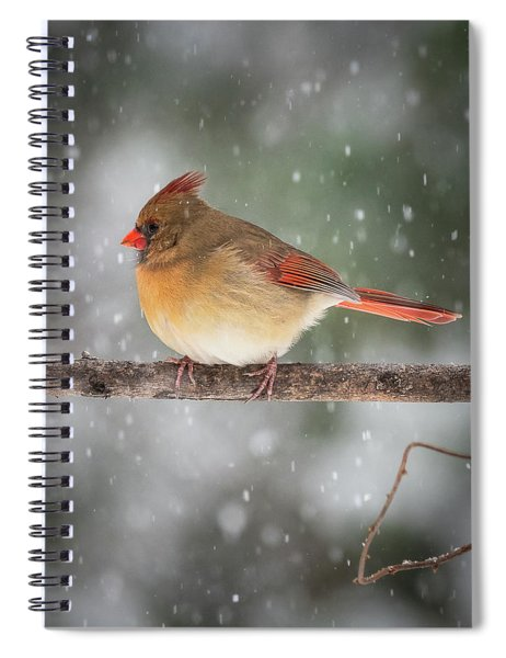 Female Red Cardinal Snowstorm Spiral Notebook