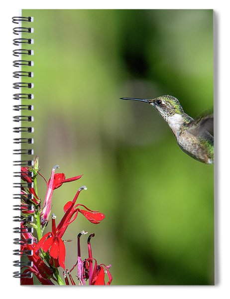 Female Ruby-throated Hummingbird Dsb0320 Spiral Notebook