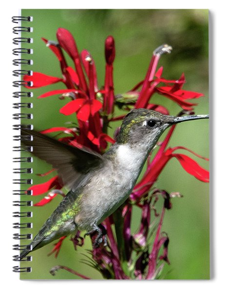 Female Ruby-throated Hummingbird Dsb0325 Spiral Notebook