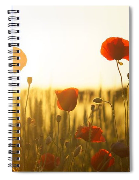 Field Of Poppies At Dawn Spiral Notebook