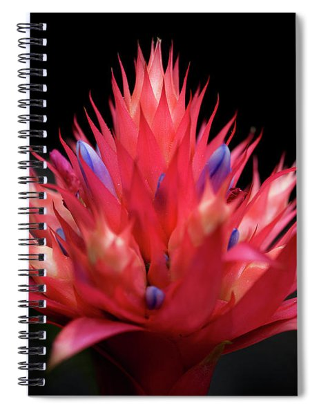 Flaming Flower Spiral Notebook