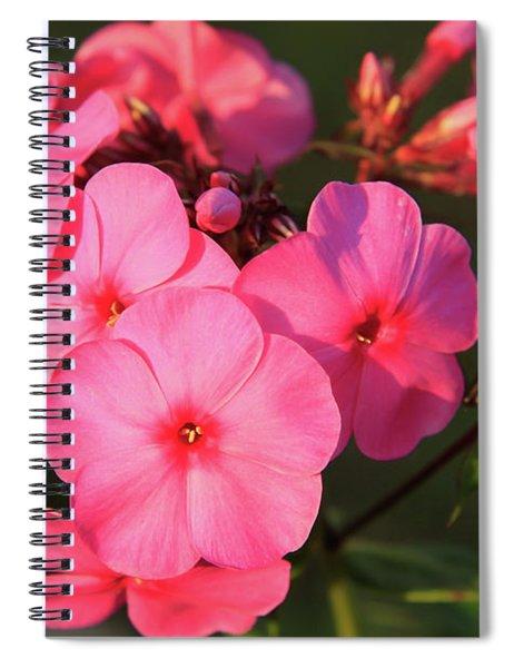 Flaming Pink Phlox Spiral Notebook