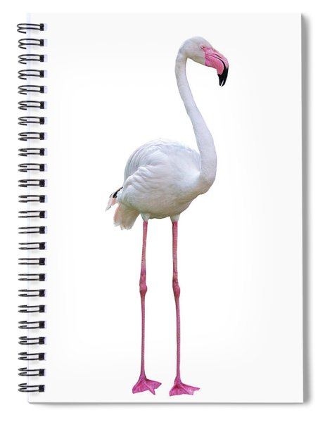 Flamingo Facing Side Extracted Spiral Notebook