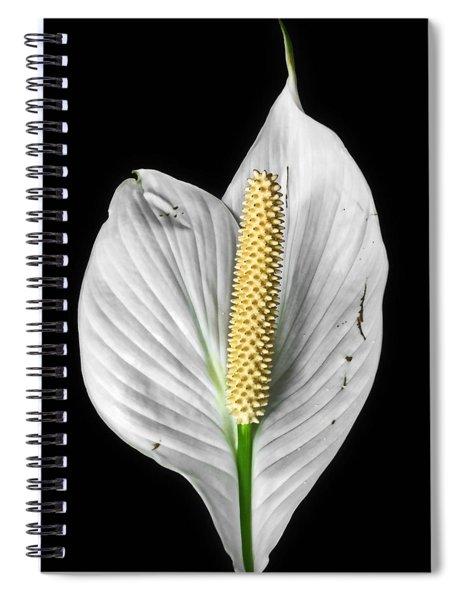 Flawed Beauty Spiral Notebook