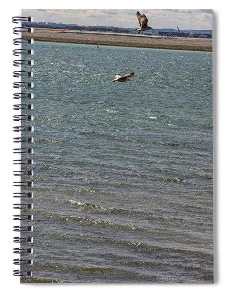 Flighty Seagulls Spiral Notebook