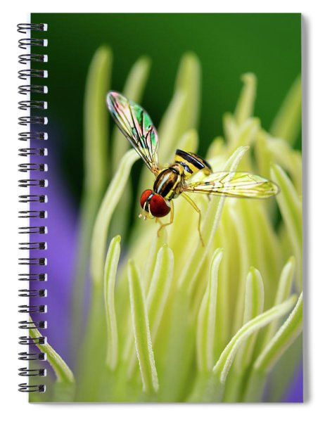 Flower Fly On Clematis Stamens Spiral Notebook