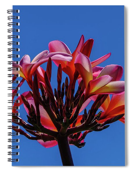 Flowers In Clear Blue Sky Spiral Notebook