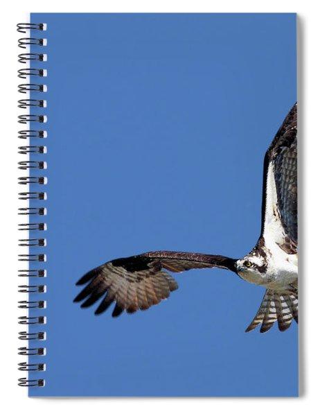 Focused Osprey Spiral Notebook