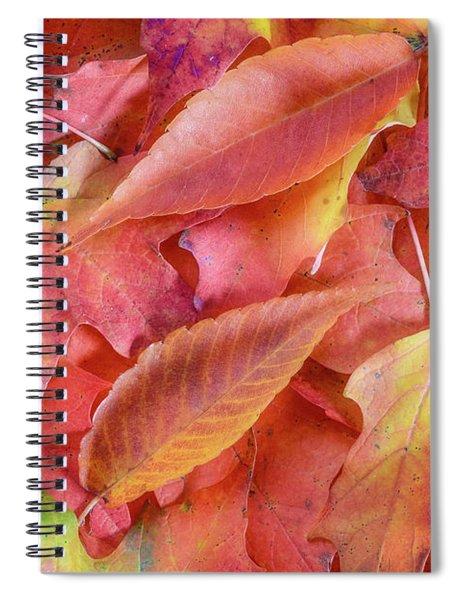 Forest Floor 2 Spiral Notebook