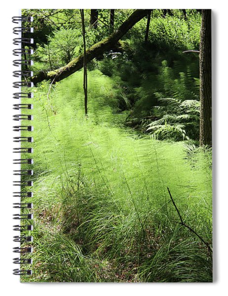 Forest Still Life With A Horsetail Spiral Notebook