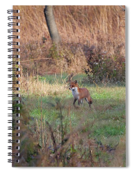 Fox In The Wild Spiral Notebook