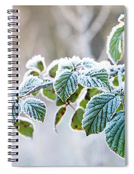 Frosty Leaves Spiral Notebook
