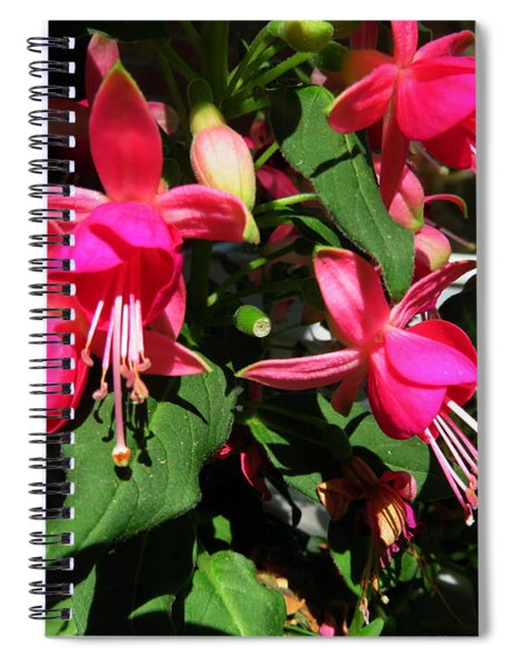 Fushia Spiral Notebook