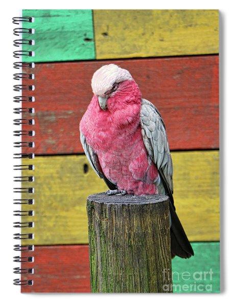 Galah Cockatoo Spiral Notebook