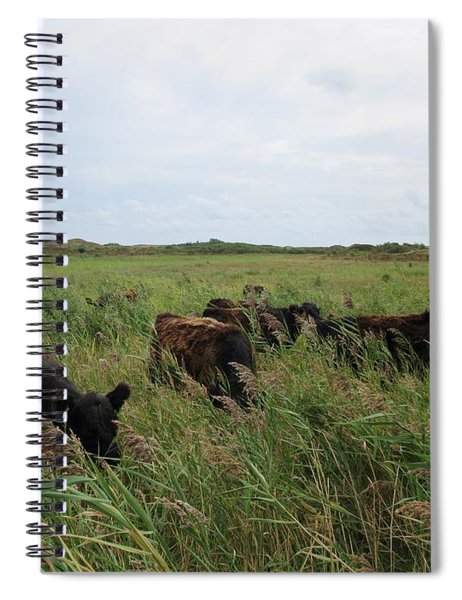 Galloway Cows On Texel North Holland Spiral Notebook