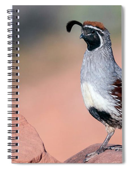 Gambels Quail Two Spiral Notebook