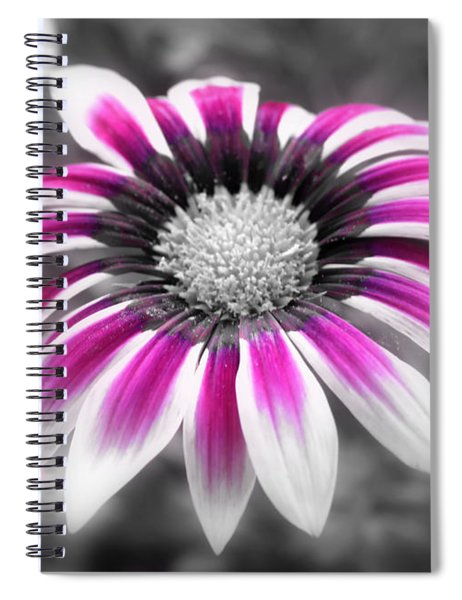 Spiral Notebook featuring the photograph Gazania Pink by Patti Whitten