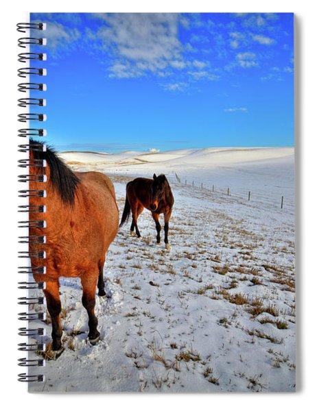 Geldings In The Snow Spiral Notebook