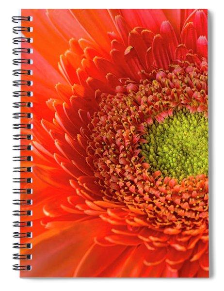 Gerbera Gorgeous  Spiral Notebook