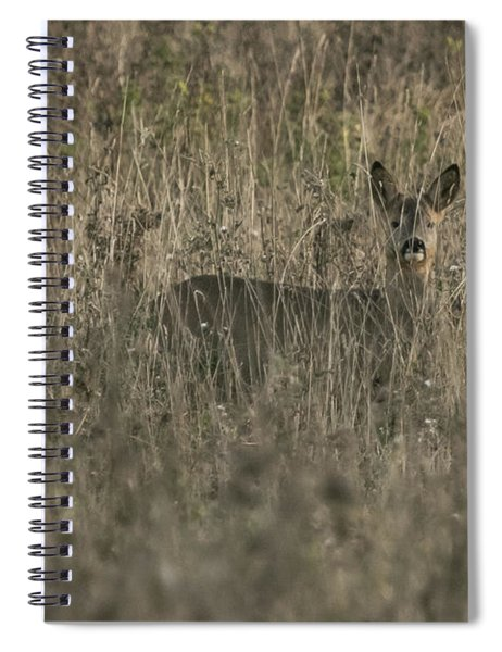 Ghosts In The Grass Roe Deer Spiral Notebook