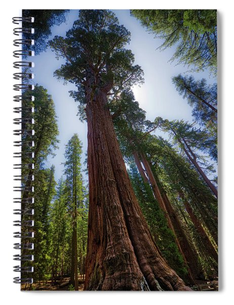 Giant Sequoia Tree Spiral Notebook