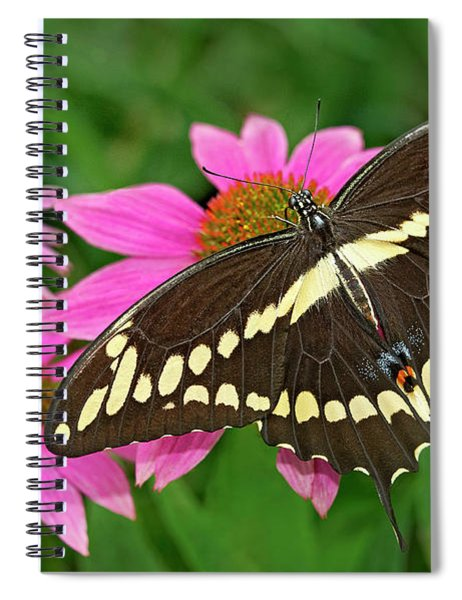 Giant Swallowtail Papilo Cresphontes Spiral Notebook