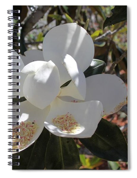 Gigantic White Magnolia Blossoms Blowing In The Wind Spiral Notebook