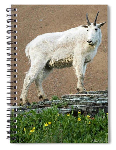 Goat Haunt Logans Pass Spiral Notebook
