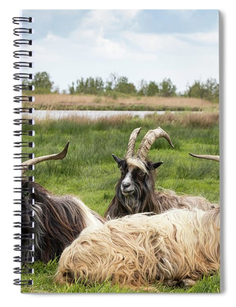 Spiral Notebook featuring the photograph Goats  by Anjo Ten Kate