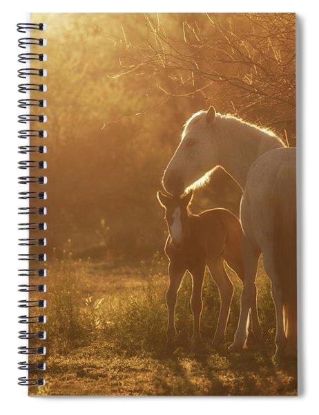 Golden Dreams Spiral Notebook