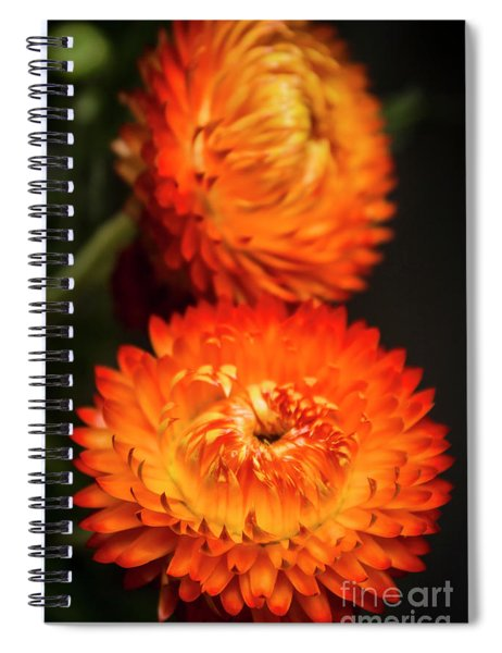 Golden Everlasting Spiral Notebook