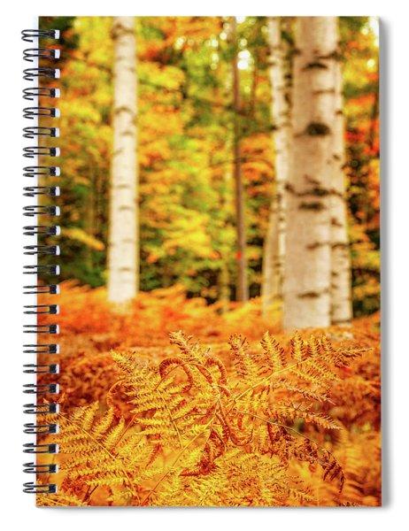 Golden Ferns In The Birch Glade Spiral Notebook