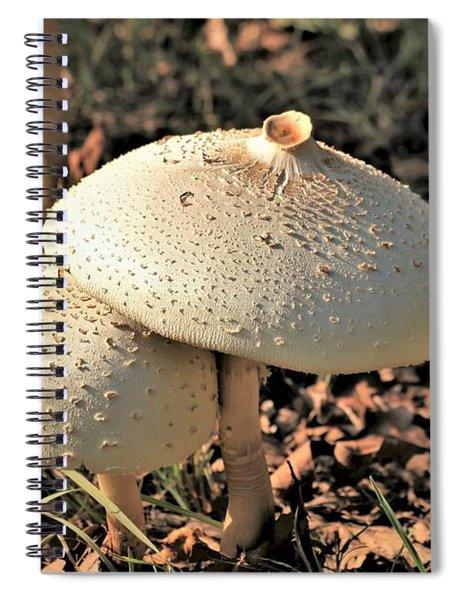 Golden Mushroom Duo Spiral Notebook