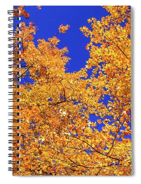 Golden Oaks Spiral Notebook