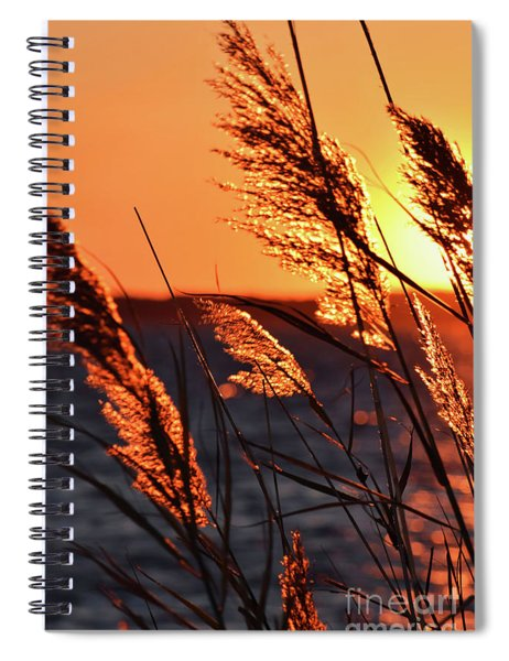 Spiral Notebook featuring the photograph Golden Reeds by Patti Whitten