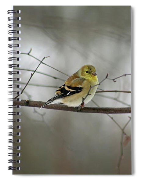 Goldfinch In Winter Looking At You Spiral Notebook