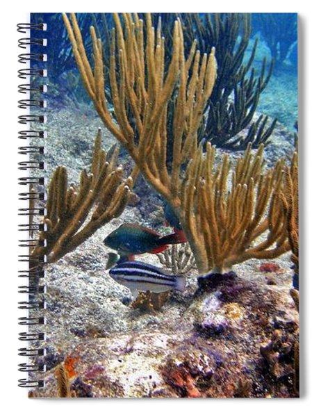 Gorgonian Parrotfish Spiral Notebook