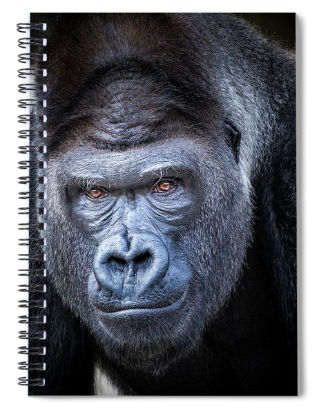 Spiral Notebook featuring the photograph Gorrilla  by Robert Bellomy