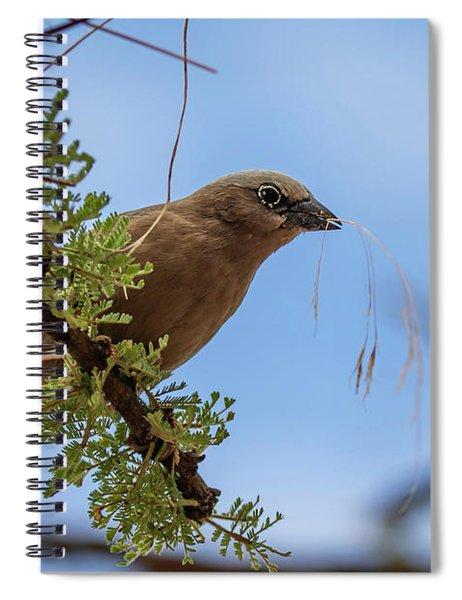 Gray-headed Social Weaver Spiral Notebook