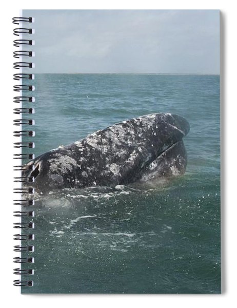 Gray Whale In Bahia Magdalena Spiral Notebook