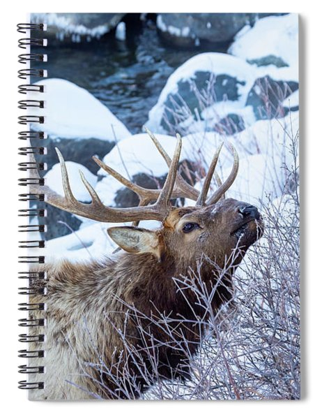 Grazing Elk Spiral Notebook