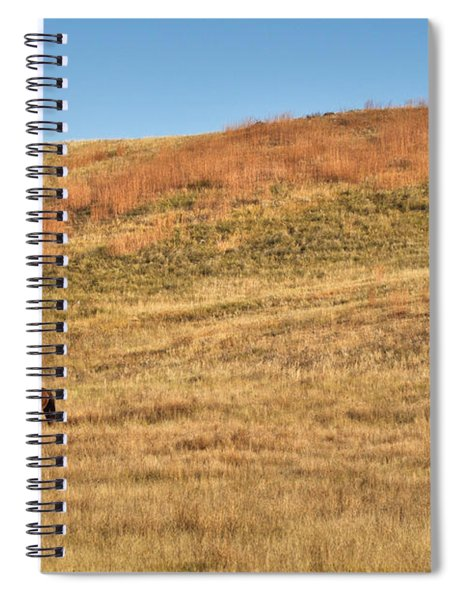Grazing In The Grass Spiral Notebook