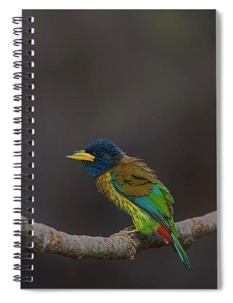 Great Barbet Spiral Notebook