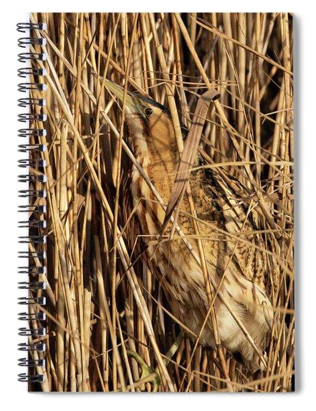 Great Bittern Spiral Notebook