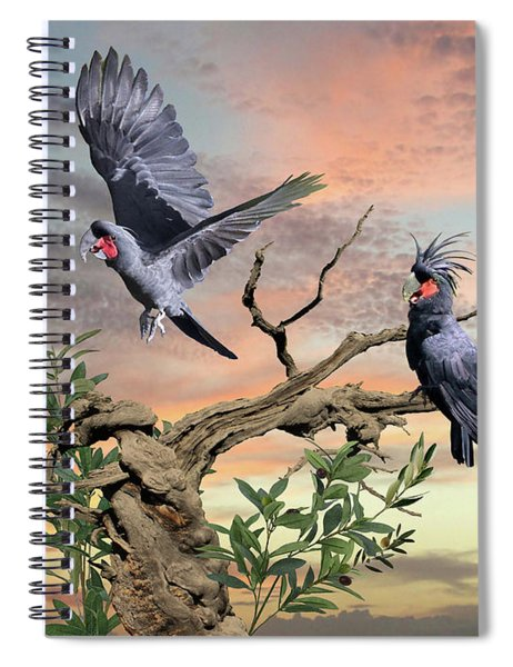 Great Black Cockatoo Pair Spiral Notebook