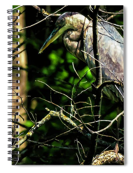 Great Blue Heron In The Tree Spiral Notebook by Edward Peterson