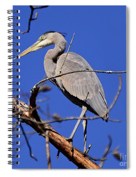 Great Blue Heron Strikes A Pose Spiral Notebook